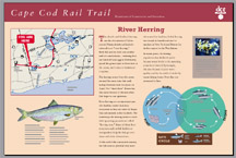 An interpretive sign on Rail Trail where it goes over the Herring River, Harwich